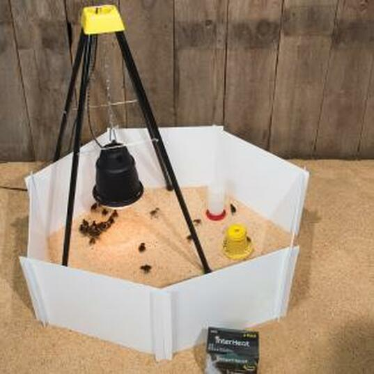 Premier Brooder Kit W Heat Lamp Assembly Amp Best Buys Choe Chicken Heaven On Earth